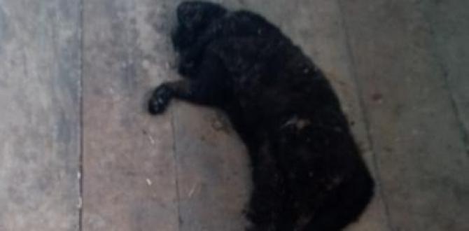 Negro el gato de doña Edna también murió envenenado.