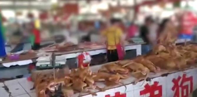 Activistas buscan que la feria de carne de perro no se celebra más.