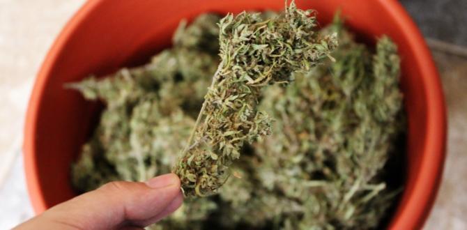 Cannabis medicinal - Pacientes - Despenalización