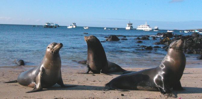 Lobos marinos de Galápagos
