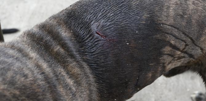 Perro agredido