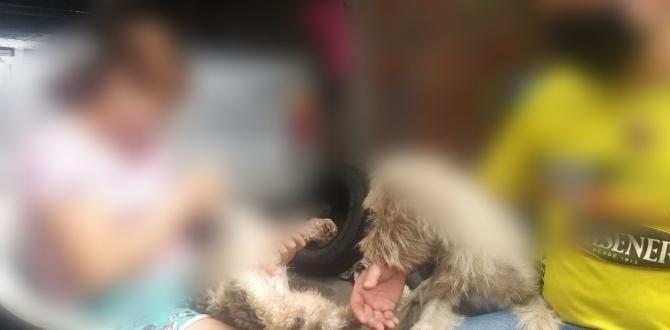 Hasta ayer la menor estuvo al cuidado de su padre, fue llevada a una casa de acogida.