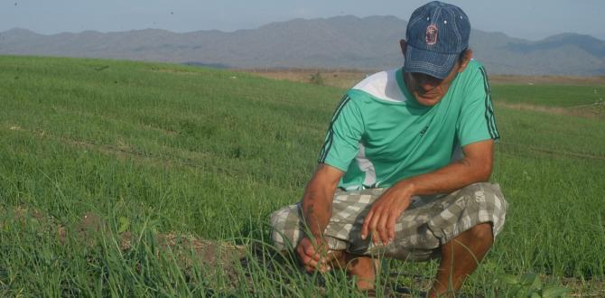 thumbnail_La cebolla es uno de los cultivos no tradicionales que ahora producen los campos de Santa Elena