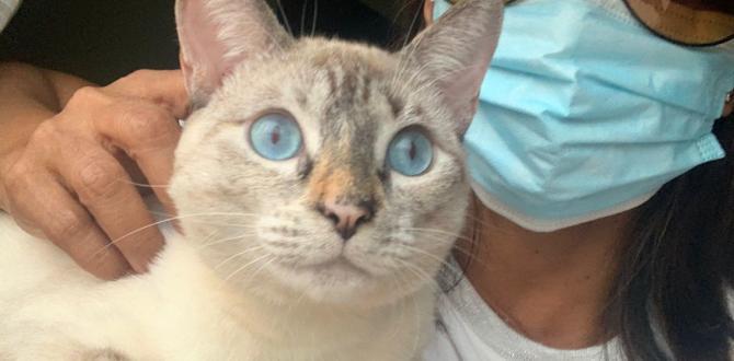 gato afectado