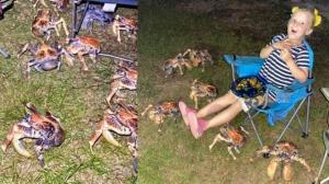 cangrejos-gigantes-ataque-comida-fotos