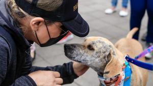 feria de adopción animal