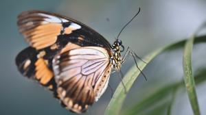 Las alas de la mariposa pueden repeler el agua y reducir el impacto de la lluvia.