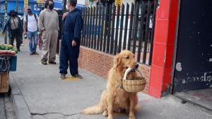 Zeus, el perro educado