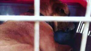 Imagen perros envenenados2