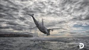 air-jaws-tiburones-chris-discovery
