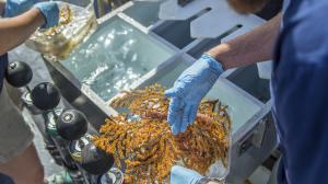 Galápagos descubren nuevas especies