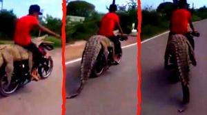 videos-virales-cocodrilo-moto-youtube-instagram