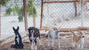 Refugio canino