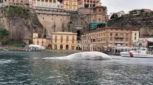 La ballena fue encontrada en Italia.
