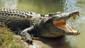 El cocodrilo se comió a un niño que estaba pescando, en Indonesia.