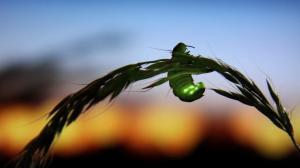 La luz artificial podría ser la causante de la baja en el apareamiento de las luciérnagas.