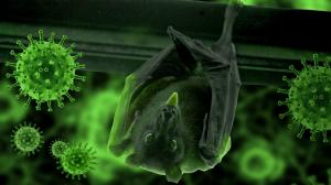 El covid-19 se habría transmitido de una murciélago a otro animal.