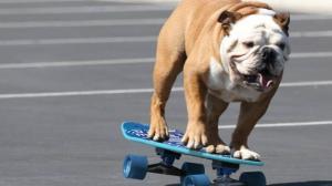 El perrito tendría más equilibrio que tú.