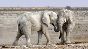 El elefantes habría aplastado al cazador.