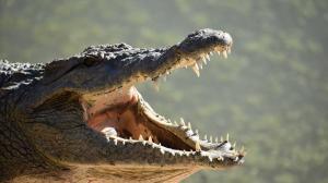reptile-3555792_1280