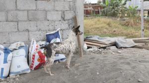 Darwin Octavio Muentes Moreira fue asesinado la noche del miércoles presuntamente por defender a su mascota, Camionero.