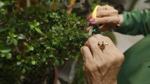 bonsai amelia