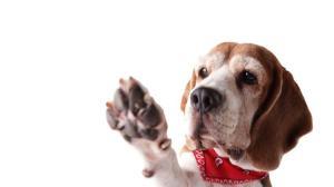 como-cuidar-almohadillas-perros-1200x800