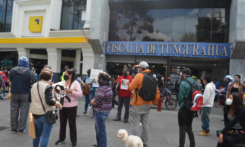 ambato protesta perros