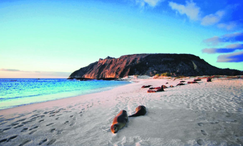 Galápagos enfrenta días difíciles. Su economía, basada en el turismo, está prácticamente  paralizada. Sin visitantes  no hay dinero.