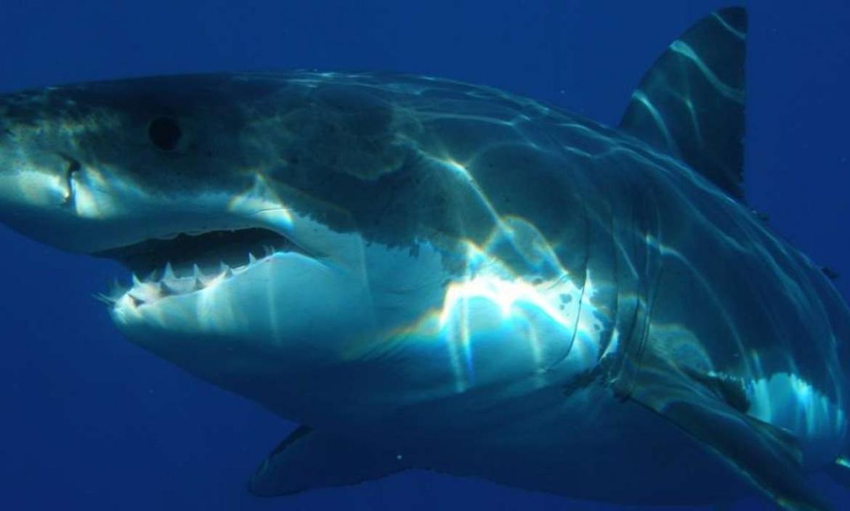 El tiburón se le estaba acercando al niño.
