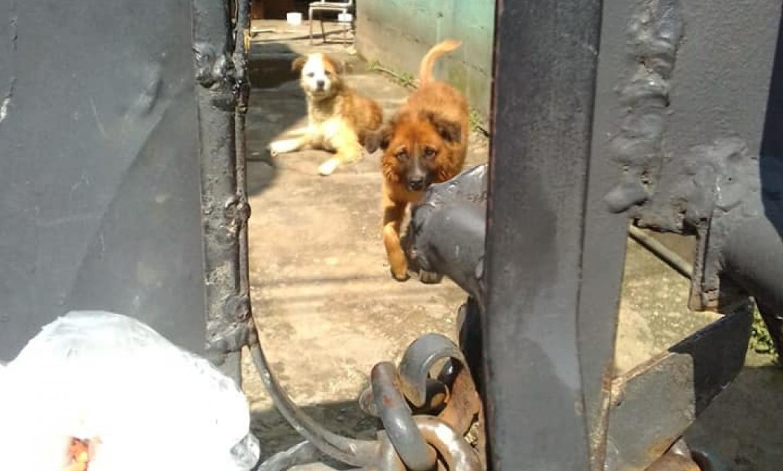 Imagen perritos violados Lucky