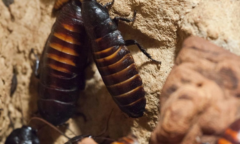 Imagen cockroaches-164369_1280