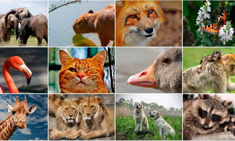 Imagen animales