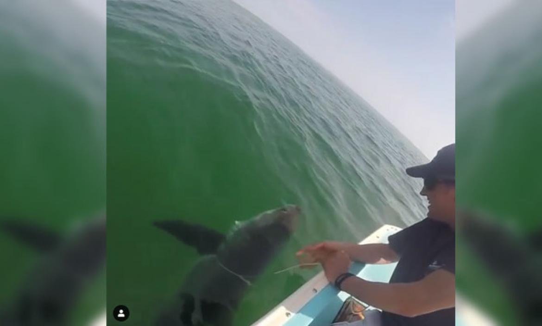 Imagen tiburon blanco