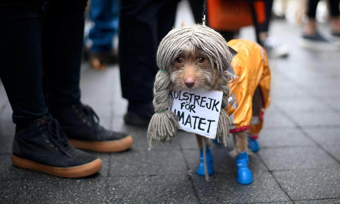 A dog dressed in a costume as Greta Thunberg attends the Tompkins Squ