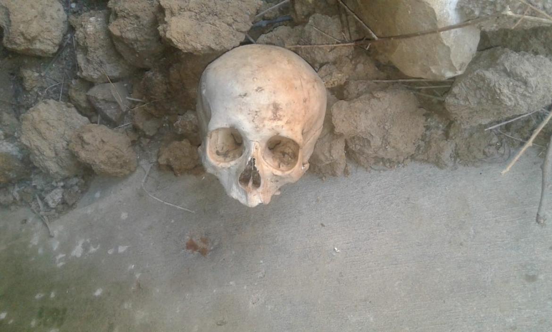 Imagen el cráneo encontrado