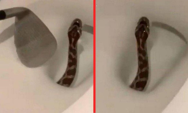 serpiente-bano-video-viral-retrete-servicio