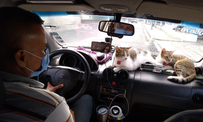 taxista gatuno