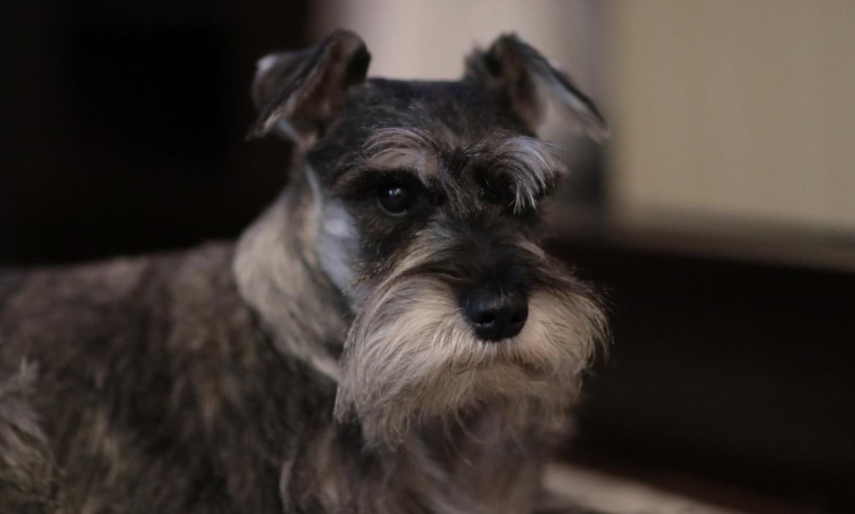 dog-3475762_1920