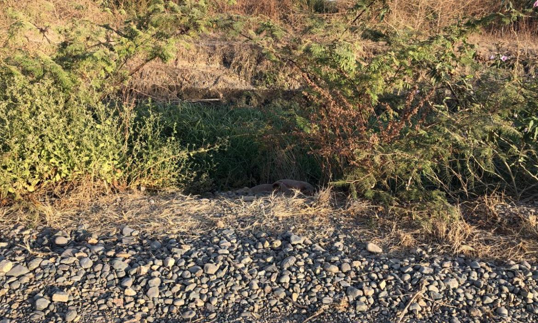 El cuerpo de la colombiana Katherine Jiménez Parra fue hallado junto a un canal de agua, en un sector desolado de Durán.