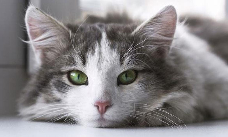 El gato vive en California.