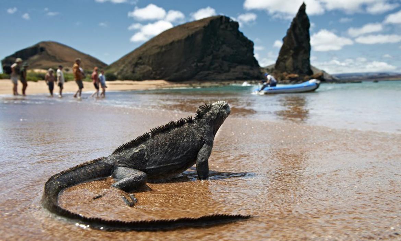 Iguana con turistas 1