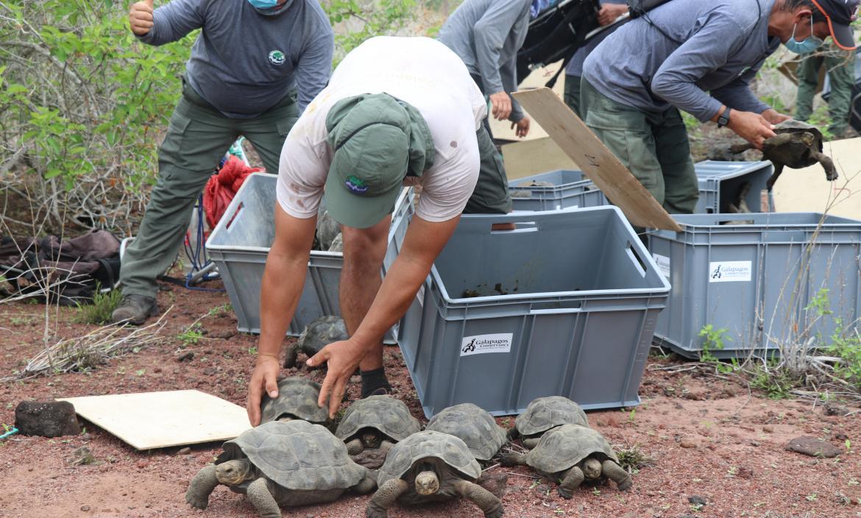 Tortugas en isla Santa Fe