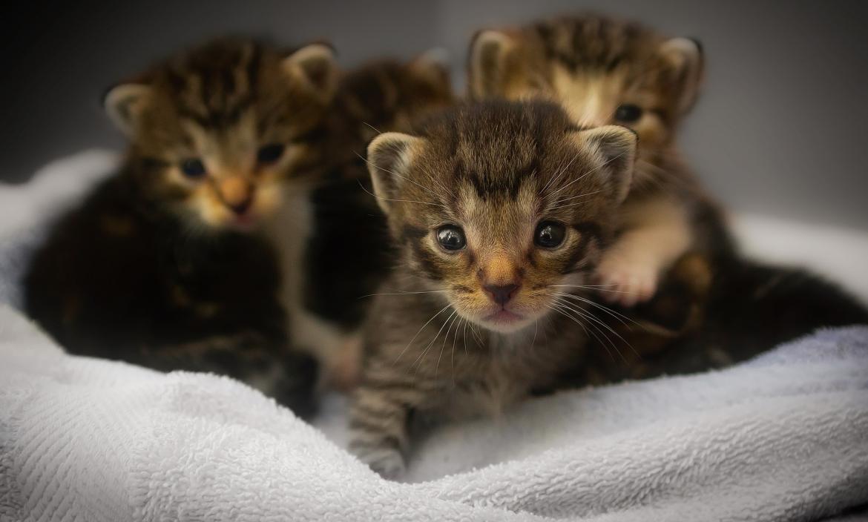 Los gatitos fueron atendidos en el centro médico.