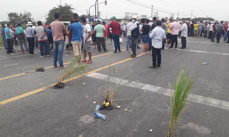 A la protesta también llevaron plantitas de arroz y las colocaron en la carretera.