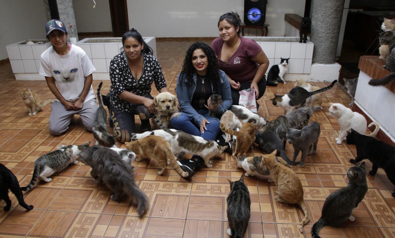 Refugio gatos - Maltratados - Quito