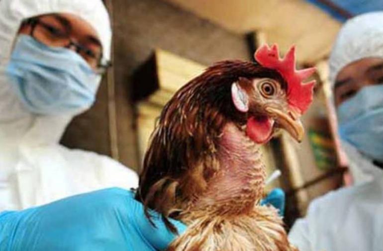 Se detectó un brote de gripe aviar en Mai Po.