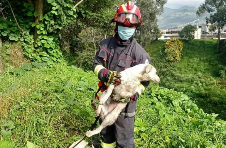 Rescate canino